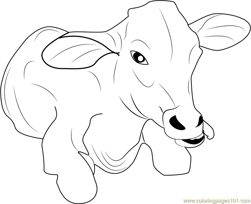 Baby Cow Coloring Pages  Baby Cow Coloring Page Free Cow Coloring Pages