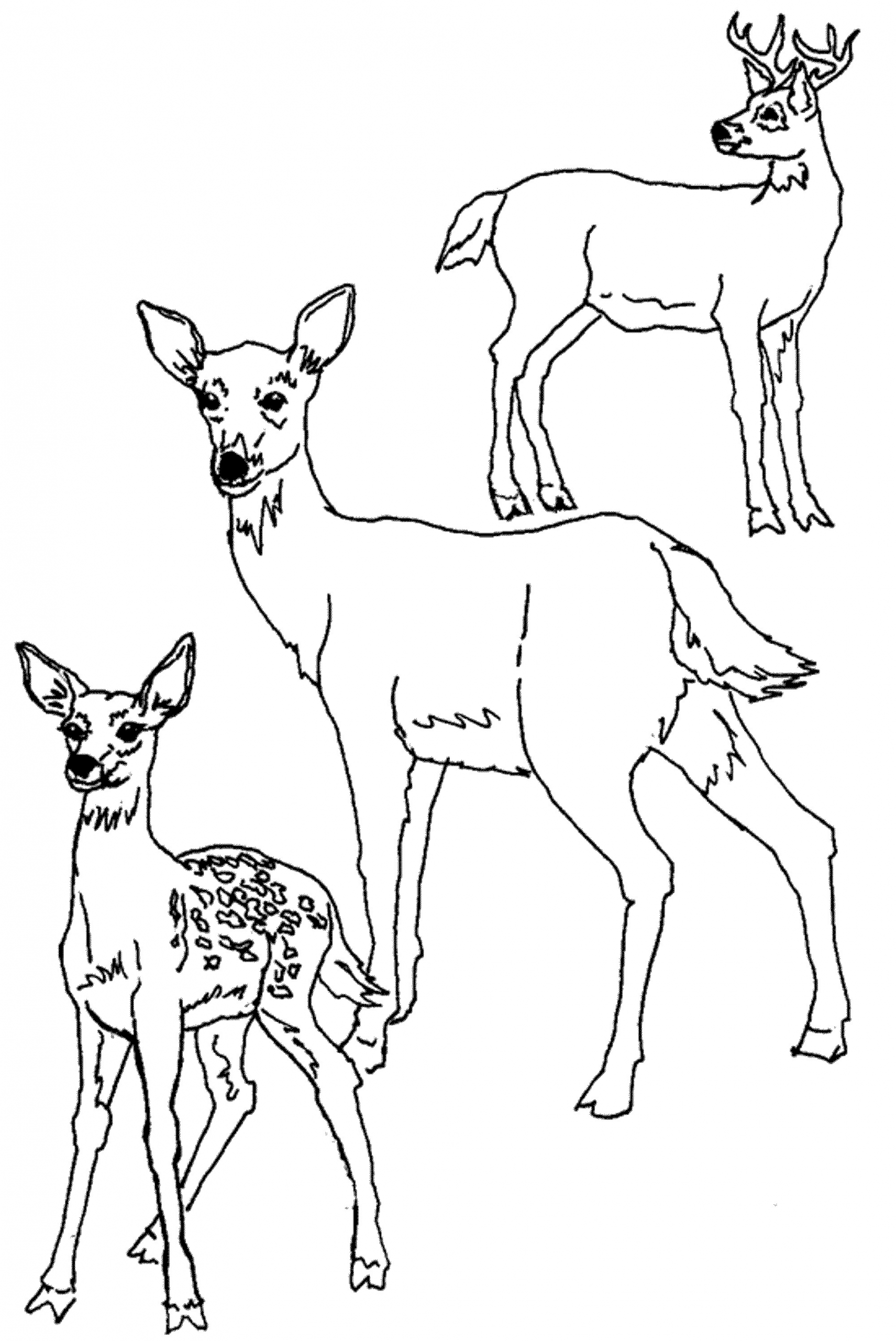 Baby Deer Coloring Page  Print & Download Deer Coloring Pages for Totally
