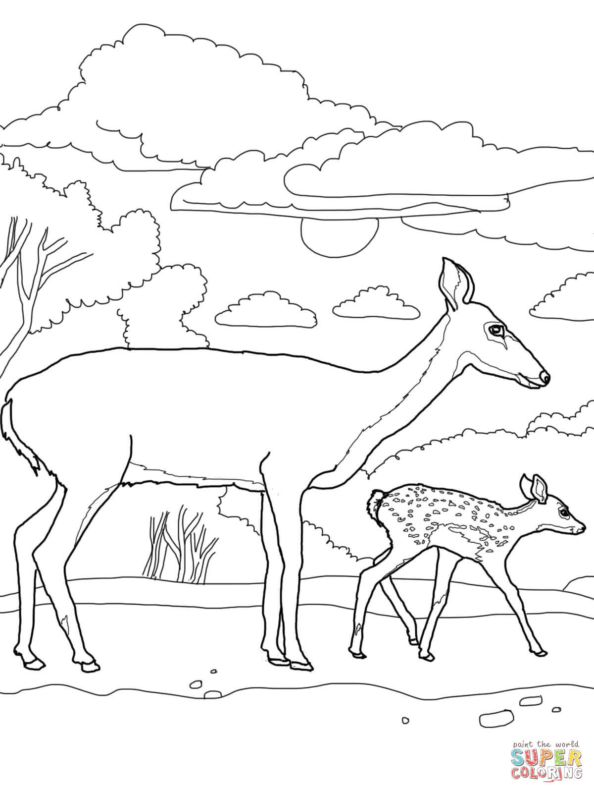 Baby Deer Coloring Page  Baby Deer Coloring Page Coloring Home