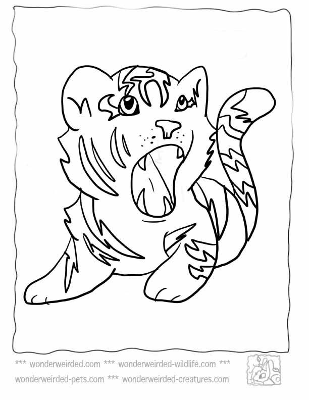 Baby Tiger Coloring Pages  Baby Tiger Coloring Pages Coloring Home