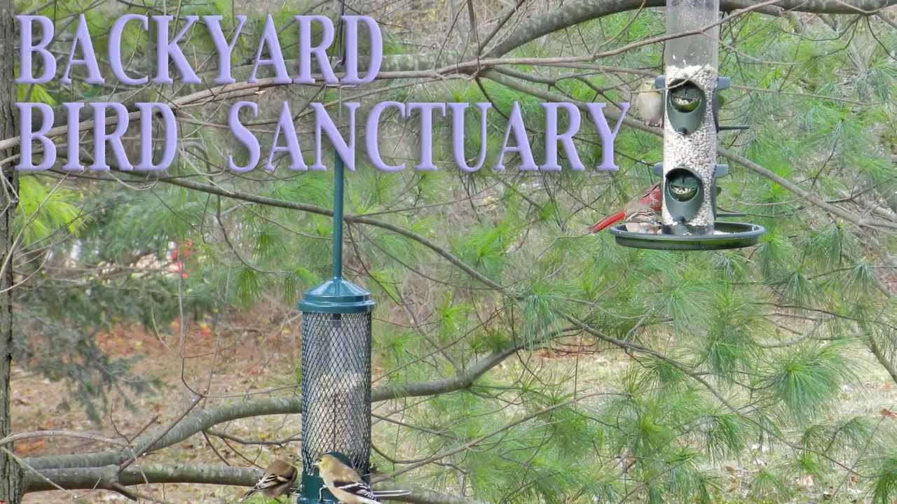 Backyard Bird Sanctuaries  Backyard BIRD Sanctuary