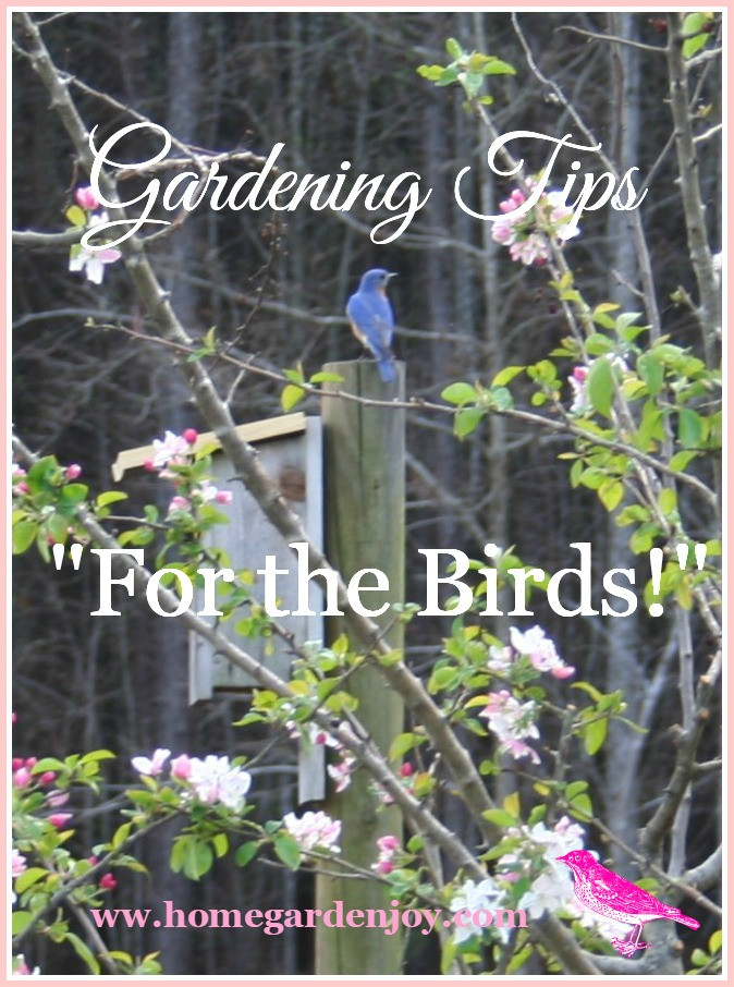 Backyard Bird Sanctuaries  Garden Landscaping Ideas Create a Backyard Bird Sanctuary