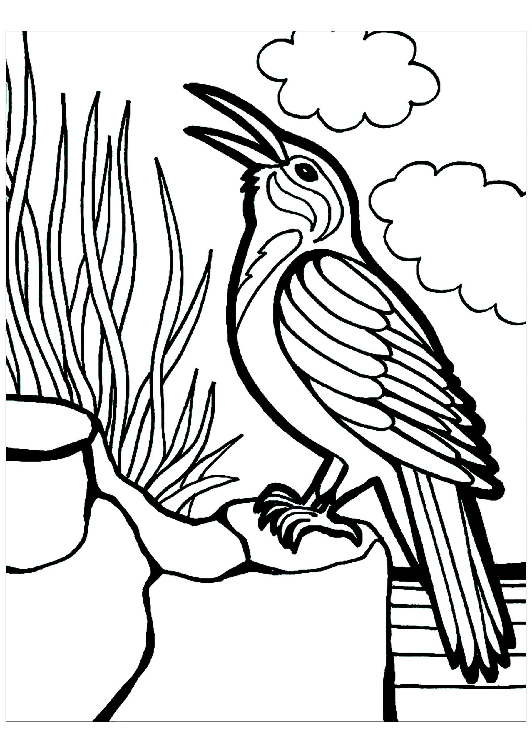 Children Coloring Page  Birds to print for free Birds Kids Coloring Pages