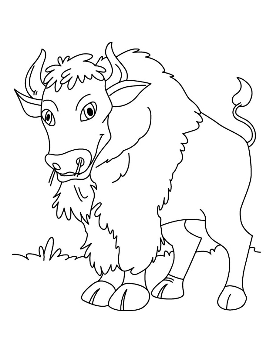 Coloring Kids  Free Printable Bison Coloring Pages For Kids