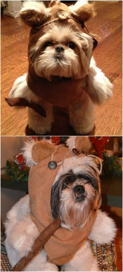 DIY Dog Ewok Costume  These 24 Halloween Pet Costumes may Just be Better than