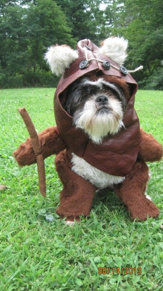 DIY Dog Ewok Costume  1000 images about Critters In Costume on Pinterest