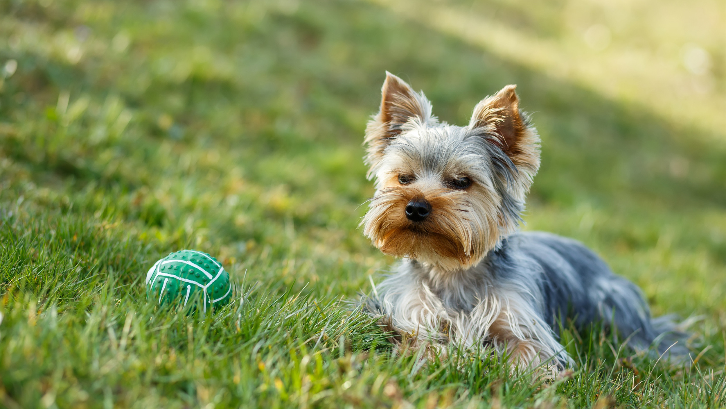 Dog Proof Backyard  Dog eating the grass 6 ways to pet proof your lawn and