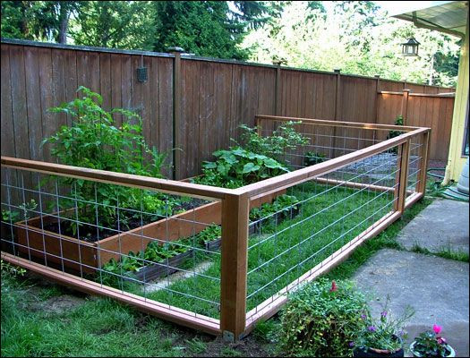 Dog Proof Backyard  12 best Dog friendly proof gardens images on Pinterest