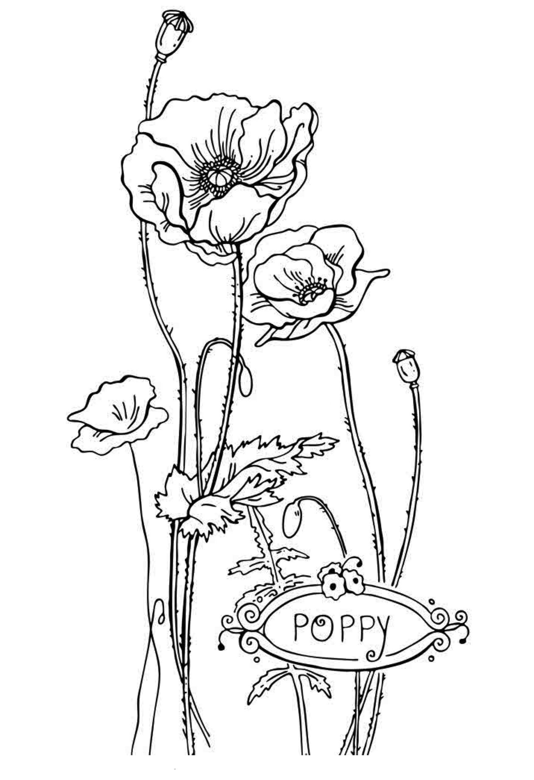 Kids Coloring Picture  Free Printable Flower Coloring Pages For Kids Best