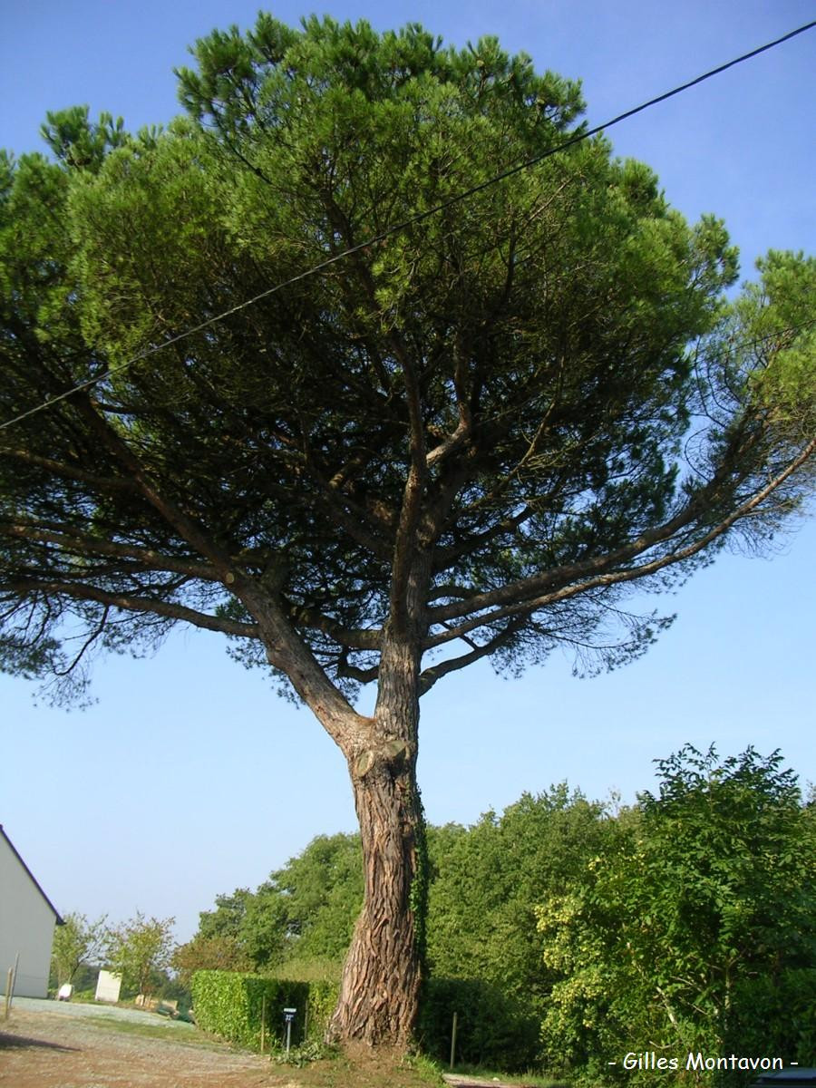 Pins Arbre  23 Ideas for Pins Arbre Home Family Style and Art Ideas