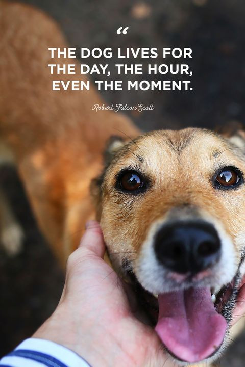 Quotes About Dogs And Kids  40 Best Dog Quotes Cute Sweet Quotes About Dogs