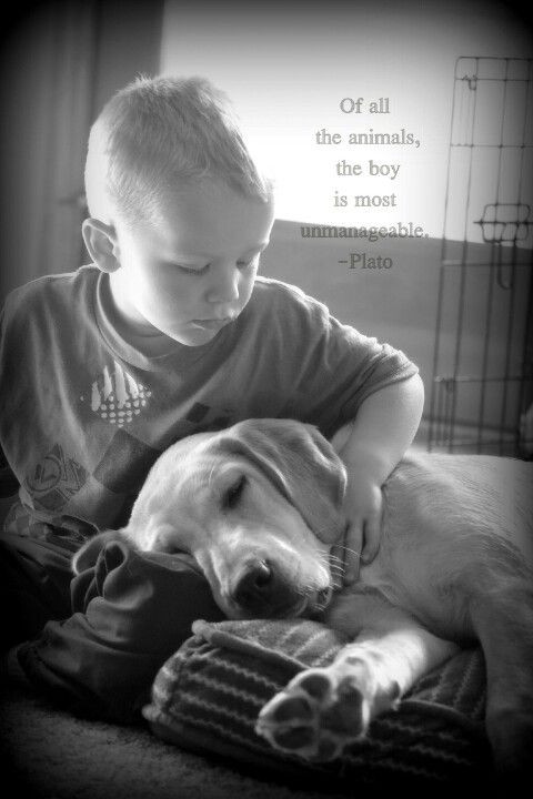 Quotes About Dogs And Kids  Quote with little boy and puppy