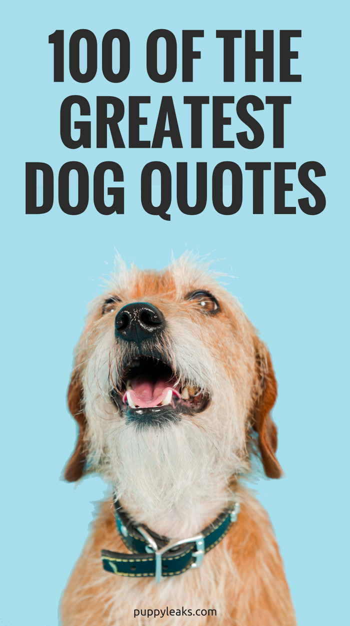Quotes About Dogs And Kids  100 of the Best Dog Inspired Quotes Puppy Leaks
