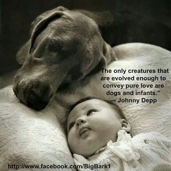 Quotes About Dogs And Kids  61 Most Amazing Innocence Quotes And Sayings