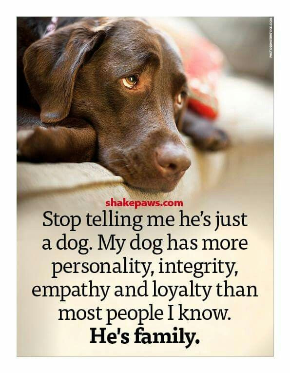 Quotes About Dogs And Kids  515 best For the love of Animals images on Pinterest