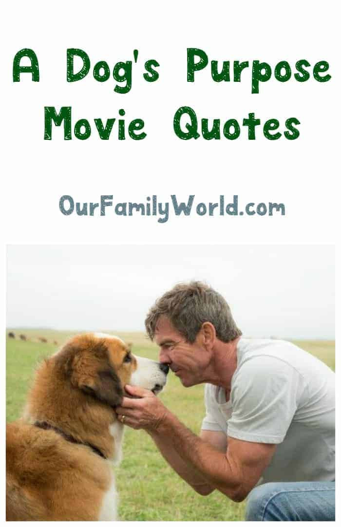 Quotes About Dogs And Kids  Heartwarming Quotes from A Dog s Purpose Movie & Book in